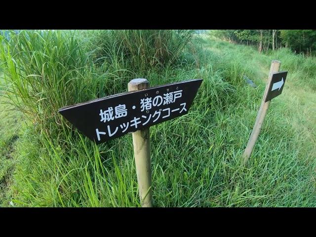 トレッキング・・・城島・猪の瀬戸コース、オオキツネノカミソリを求めて