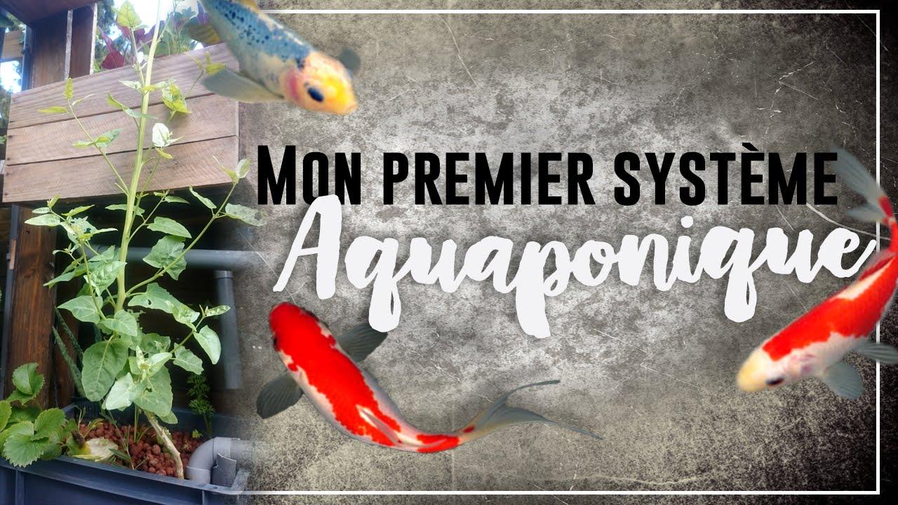 Aquaponie : Système aquaponique hors serre