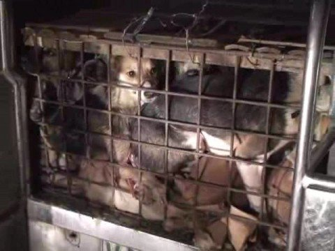 The Philippines' Illegal Dog Meat Trade