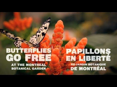 Butterflies At The Montreal Botanical Garden //  Papillons Au Jardin Botanique De Montréal