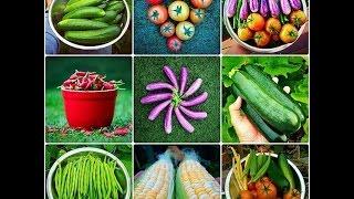 Organic Vegetable Gardening Tips for The Beginners