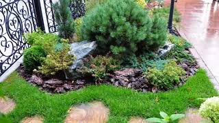 видео Что посадить вдоль забора на даче: деревья, кусты, растения, композиции на фото