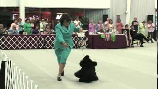 The 2014 Cocker Spaniel National - Best Of Breed