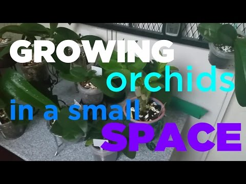 Growing Orchids in