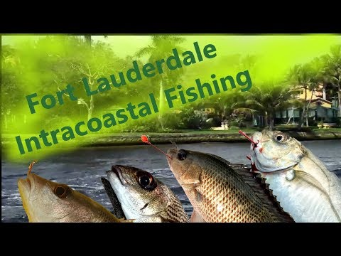 Fort Lauderdale Intracoastal Fishing