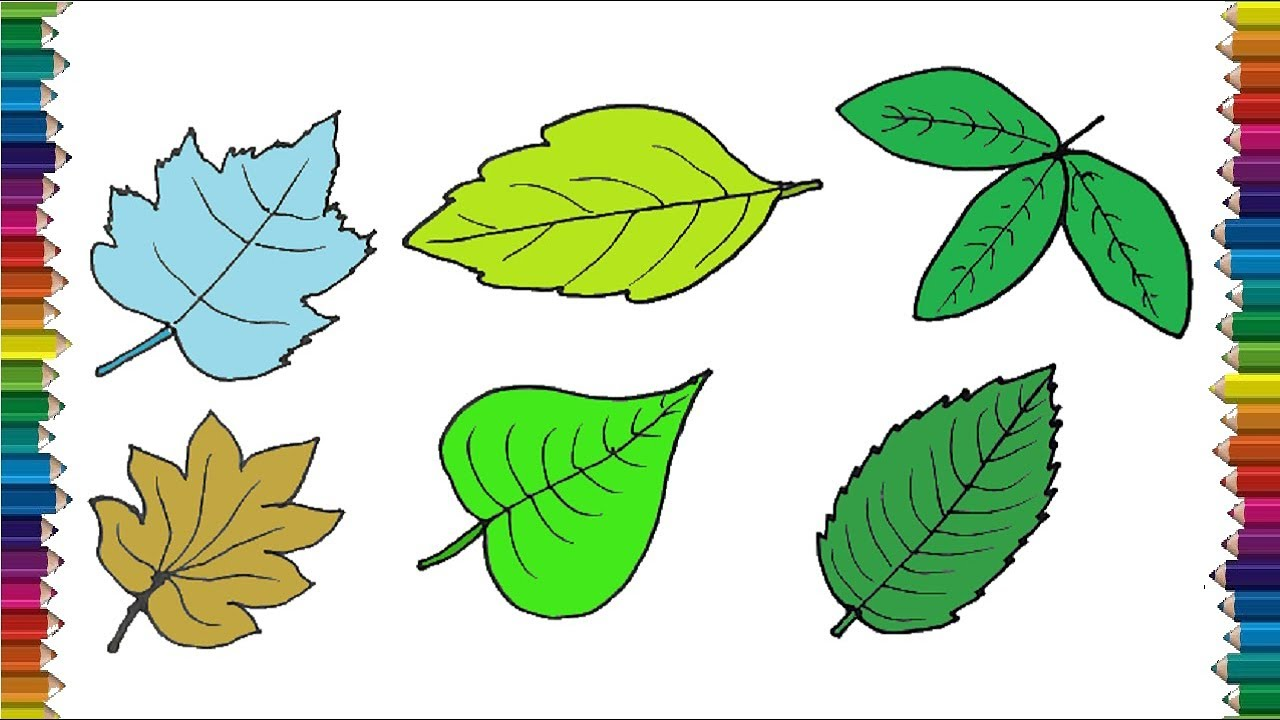 How To Draw A Leaf Step By Step Leaf Drawing And Coloring For Kids Youtube