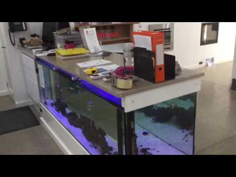 Front counter aquarium at Jeremy McPherson plumbing