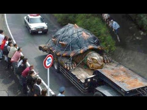 5 TERRIFYINGLY Large Creatures That Will Give You Chills!