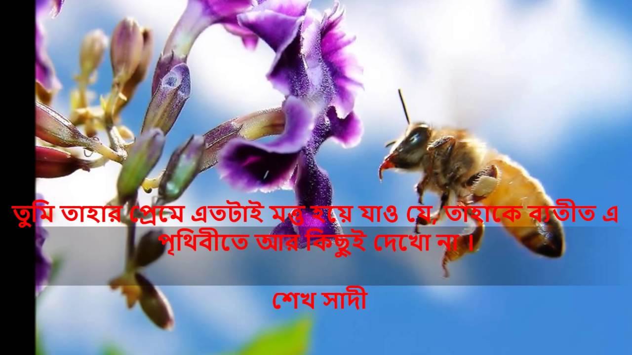 bangla instrumental beautiful inspirational quotes