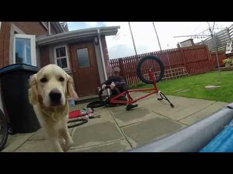 My dog steals my gopro
