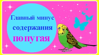 VLOG:Главный минус содержания попугая//Волнистый попугай Тоша//Уход за попугаем