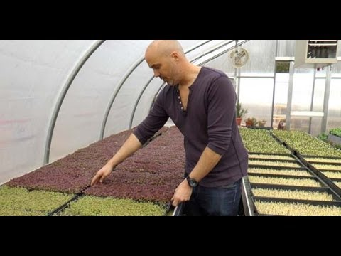 Good Water Farms: Providing Organic Big Nutrition in Small Plants - East Hampton, NY