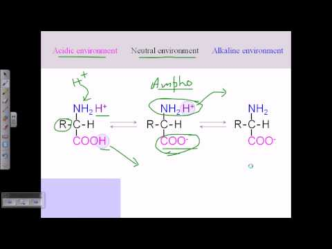 Amino acid structures (part 2)