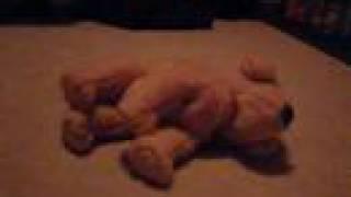 Dead Puppies Aren