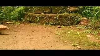 WhatsApp status Malayalam short video 99.8k views