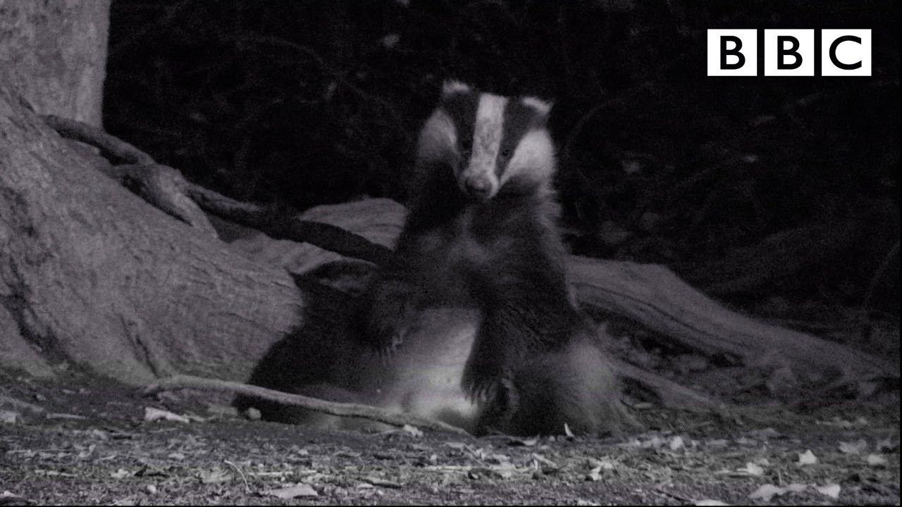 Best of British Wildlife ? 6.11.2020 ? BBC