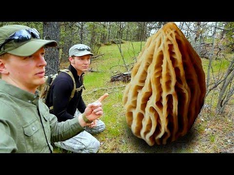 Look What We Found  Morel Hunting Washington State