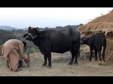Maal aur Amaal - Episode 2 (Dadyal Online)