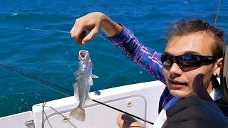 #129 США.Рыбалка в океане. Акулы,электрический скат.Флорида...