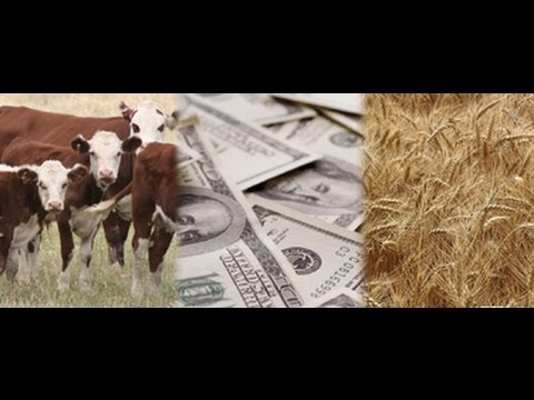 Sharing My Opinion - Beef Cattle Futures and Commodity Production Cycle