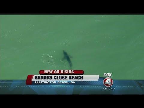 Sharks Close Huntington Beach In California