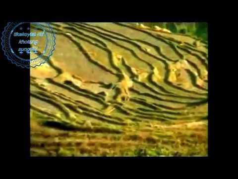 Mattiko kassam by tikakoyee Full HD 720p High-definition Video (Film Format)