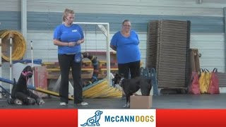 Dog Training Tips: Funkee And The Cardboard Box