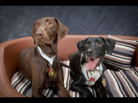 Martha & Max - German Pointer Mix - 4 Weeks Residential Dog Training