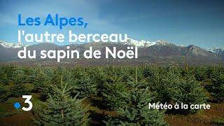 Les Alpes, l autre berceau du sapin de Noël - Météo à la carte d70eb47959c6
