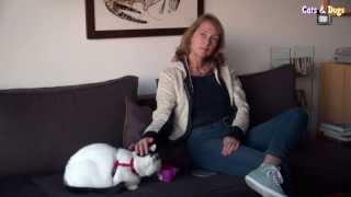 Cats&DogsTV - УДИВИТЕЛЬНЫЙ МИР КОШЕК - КОШКИ ИЗ АМСТЕРДАМА Часть1. / AMSTERDAM CATS Part 1.