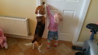 Dog helps baby open the door to the kitchen