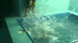 Падение в бассейн(А волосатого человека-яйца-гагага., 2013-02-10T21:23:27.000Z)