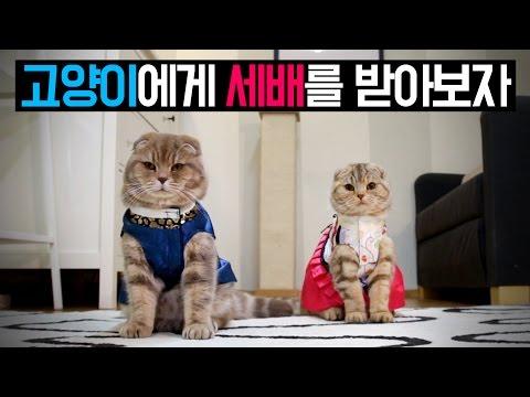 고양이에게 세배를 받아보자 Cats Bowing for Lunar New Year  2016 [SURI&NOEL CAT's STORY]