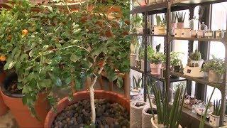 미세먼지 걱정 끝, 공기 정화 식물 키우기! @SBS …