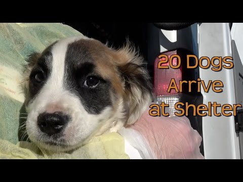 20 Dogs Arrive at Northeast Animal Shelter