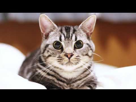 猫 DISH//