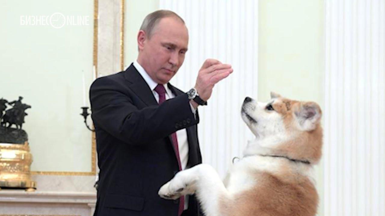 Путин показал японцам строгую собаку по кличке Юмэ