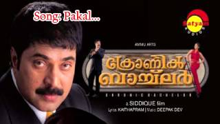 Pakal (M) - Chronic Bachelor