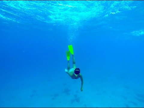 Paradise snorkeling, my everyday morning in Bequia, St vincent and the grenadines