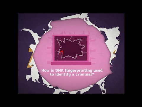 How Is Dna Fingerprinting Used To Identify A Criminal Ks3 Animation From Activate 3 Kerboodle Youtube