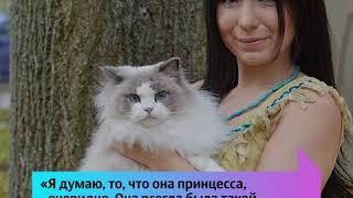 Кошка по кличке Принцесса Аврора