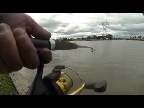 Fishing For Trout In The Roxburgh Park Lakes # 5