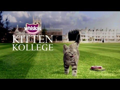 Ep. 6 Kitten Kollege: Classe d'histoire