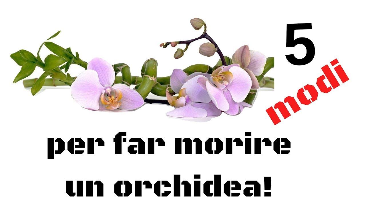 Come Far Morire Una Pianta 5 modi per far morire un'orchidea
