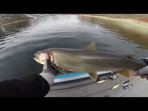 Flaming Gorge Big Lake Trout On Glide Bait  2020