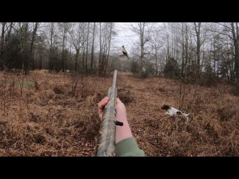 MY FIRST TIME PHEASANT HUNTING