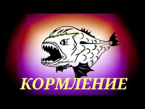 Аквариумные рыбки  Астронотус