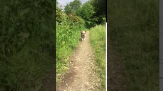 Reggie' introductory walk in the sunshine