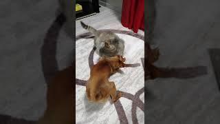 Жора и Буся 😂 Кошачья-Собачья любовь 😂