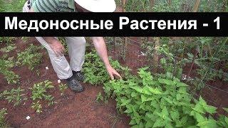 Пасека #14 Лофант - Растения для сбора меда - Часть 1/4 пчеловодство для начинающих